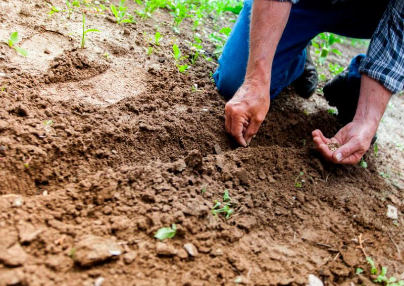curso-prl-jardineria